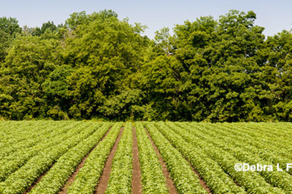 DTN Cotton Open: Off to Higher Early Start