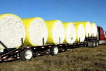 Weekly Cotton Market Review – USDA