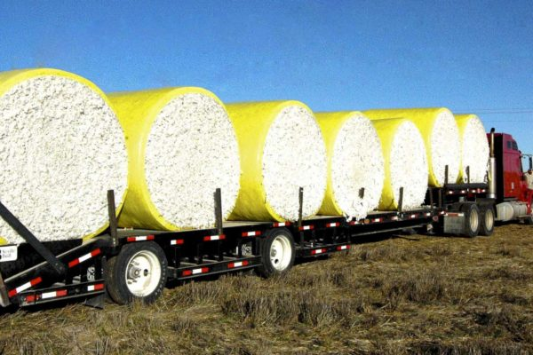 Thompson on Cotton: Strong Demand Helps Hold 66 Cent Support