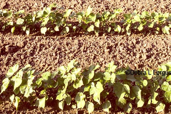 DTN Cotton Open: Ticks Lower Within Pre-Report Range