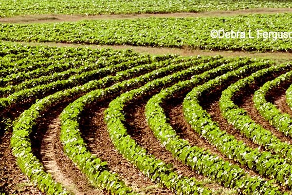 DTN Cotton Open: Trades Slightly Mixed in Early Dealings