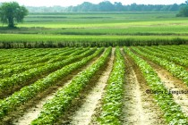 DTN Cotton Open: Ticks Lower Within Prior-Session Range