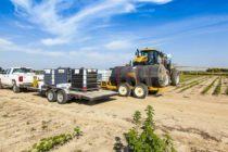 Tennessee Cotton: New Dicamba Rules – A Little Clarification