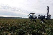 Tennessee Cotton: Recommendations for Harvest Aids – Products and Timing