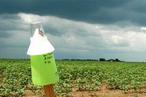 South Carolina: Clemson Weather Stations Help Farmers Conserve Water