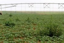 Texas Cotton: New Technologies Add to Grower Responsibilities