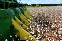 Alabama Field Reports: Harvest Season Winding Down