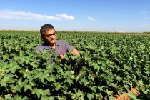 Texas Cotton, Grain Scout School, Lubbock AgriLife Center, May 25