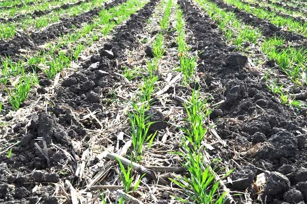 Minnesota: Nutrient Management Courses Scheduled for Feb. 6 and Feb 20