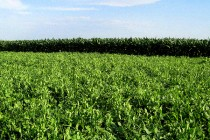 Minnesota: Winter Nutrient Management Considerations – Podcast