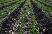 Minnesota: Cover Crop and Soil Health Learning Tour, Rushmore, Sept. 8
