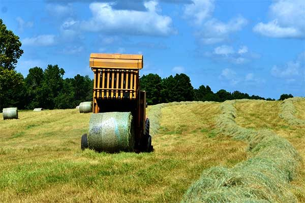 Texas Field Reports: Forage Production Good Despite Wet Weather, Pests, Weeds