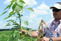 Louisiana: Dealing with Major Weed Problems After Unrelenting Rains