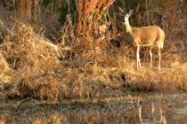 Texas: Multi-County Wildlife Management Field Day, Sonora, Oct. 26