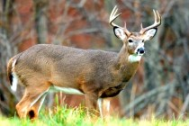 Texas Field Reports: Deer Season Expected to Provide Good Opportunities for Hunters