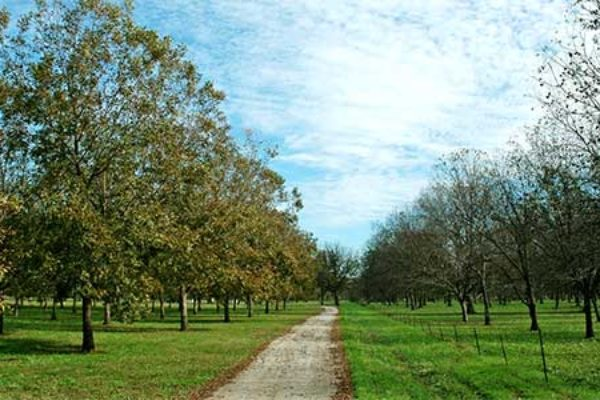 Land Management Company Aggressively Seeking Permanent and Speciality Crop Acreage
