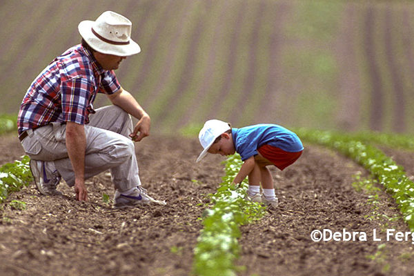 Farm Family Business: To Be Successful, Don't Act Like Family – DTN