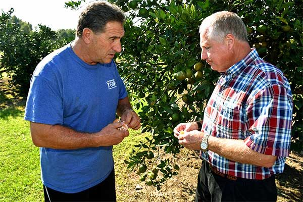 Louisiana: Citrus Grower Says Results Mixed with This Year's Crop