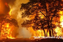10 Million Acres of Wildfires Exhaust Forest Service Budget