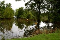 Louisiana Flood, 2016: Apply for Crop Loss Grant, Deadline Aug. 31