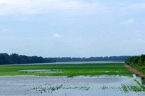 Post-Hurricane: Don't Let Flooded Crops Enter the Food Chain, says EPA – DTN