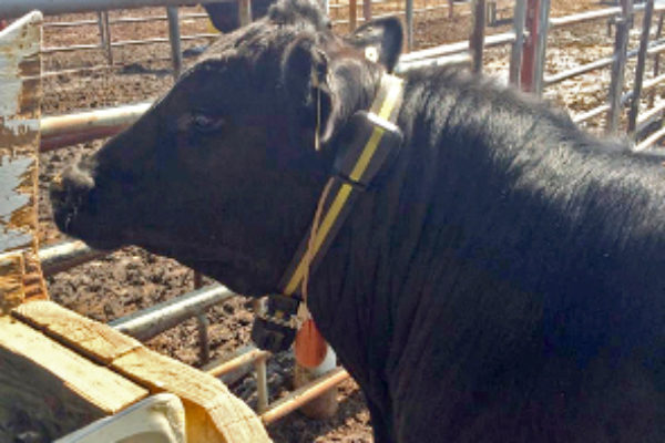 DTN Livestock Close: Weeks Ends with Mostly Moderate Gains