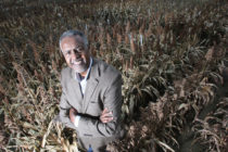 Sorghum: Purdue Received $5 Mln Grant to Develop Improved Varieties
