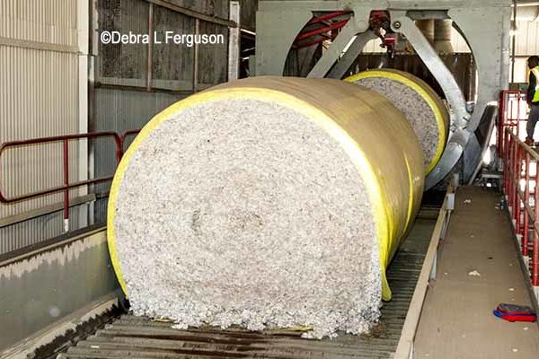 DTN Cotton Close: Settles Lower for 3rd Session