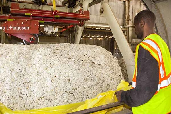 Cotton Outlook: Global Growth of Mill Use Varies by Country