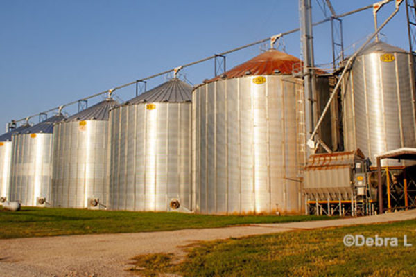 Michigan Soybeans: Drying and Storing Wet Crops