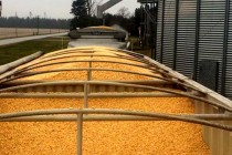 Grain Transportation: Prevent Pathogen, Pest Hitchhikers
