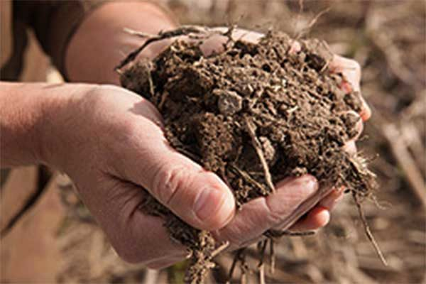 Soil Health: If it's Good for Farmers, It's Good for the Environment – DTN