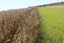Arkansas: Soybeans Set to Break State Yield Records