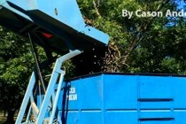 Western Region Pecans: Good Demand as Harvest Continues