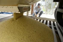WASDE Oilseeds: Domestic Soybean Crush Lowered, Stocks Raised