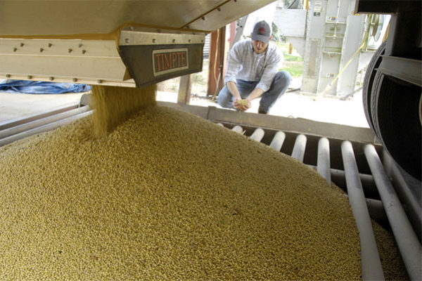 WASDE Oilseeds: Domestic Soybean Production Unchanged