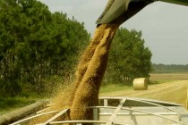 Grain Markets: International Benchmarks for Wheat Production