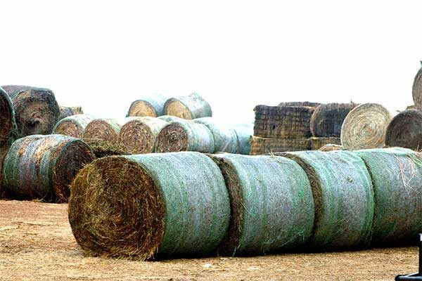 Texas Livestock: Producers Affected in Wildfires Advised on Feeding Value of Donated Hay