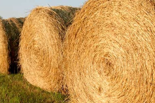 Drought in Dakotas: Hay Lottery Offered to Farmers Short on Forage – DTN
