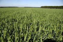 Grain TV: Wheat Market Gets Washed Out