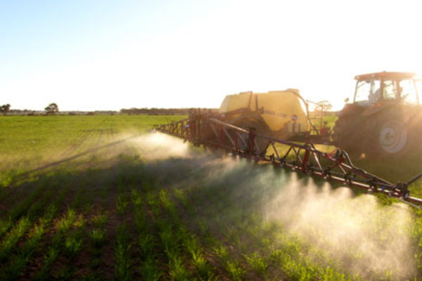 Indiana Wheat: Get Ready for Spring Herbicide Applications