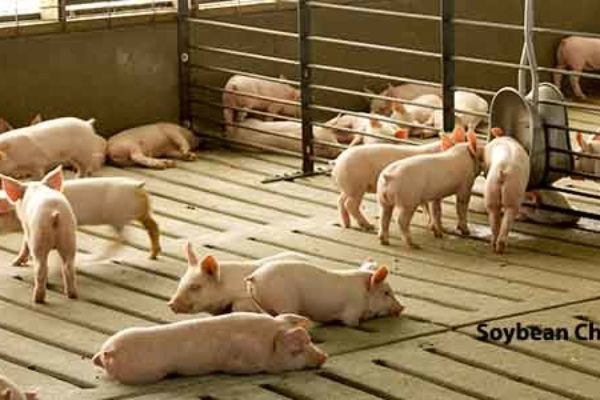 DTN Livestock Open: Hog Futures Face Early Selling Pressure