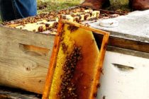 Bee Health: Protecting Pollinators from Pesticides – Everyone Plays a Part