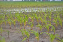 Corn Market: How Does Weather Affect Prices Over Time?