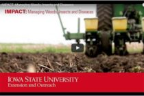 Iowa: Managing Weeds, Insects, and Diseases – Video