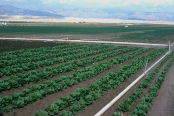 Farm Policy: Farm Bill Hearings Move to Specialty Crops