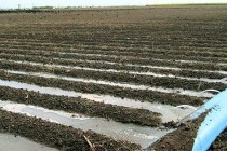 Texas: Valley Growers Eligible for Irrigation, Nutrient Management Assistance