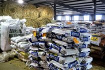 Texas Field Reports: AgriLife Extension Personnel to Assess Flooding Impact on Livestock, Pets