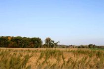 Michigan: Herbicide-Resistance – Reduce Spread of Weed Seed During Harvest, Tillage Operations