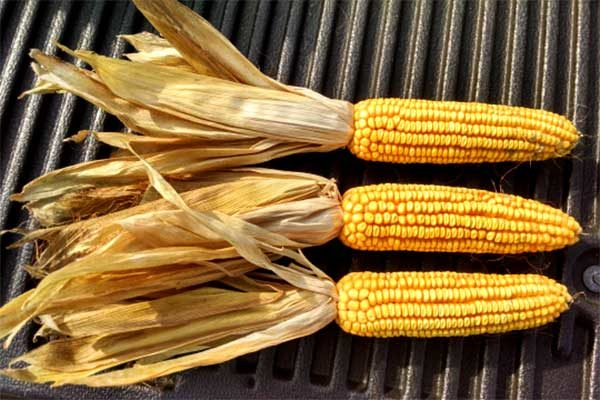 DTN Grain Close: Markets Finish Lower, but Firmer